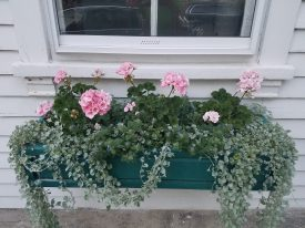 Window Boxes at the Little Compton Town Hall